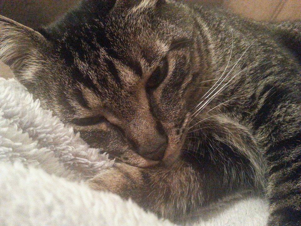 Pimpo, meu gatinho