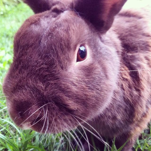 Tobby, o coelho da Camila